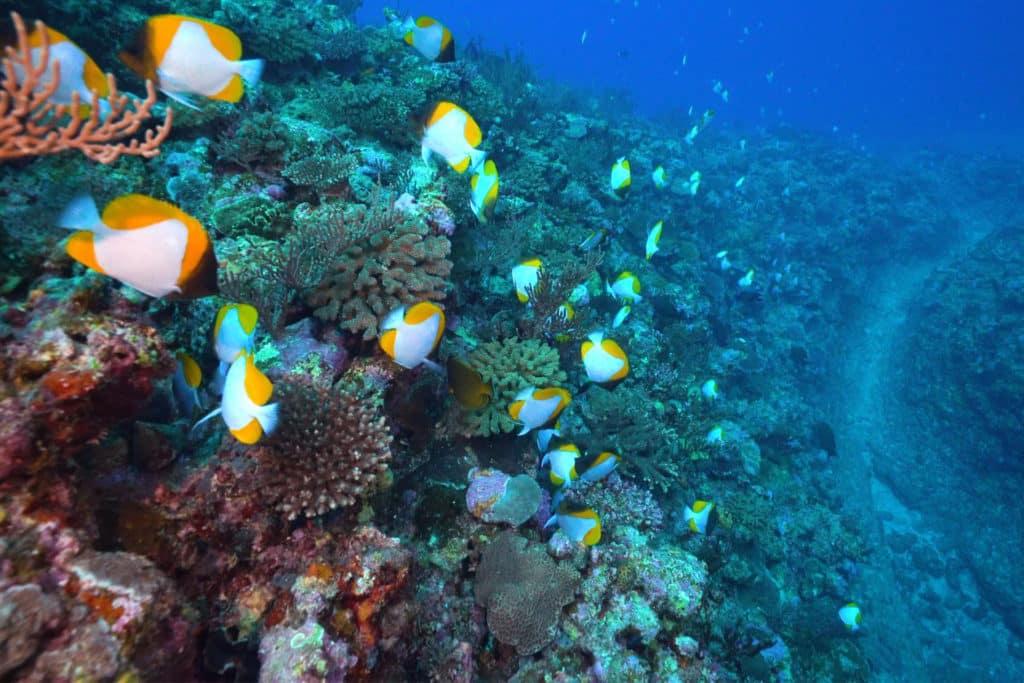 Fondos marinos, playas de Japón, mar