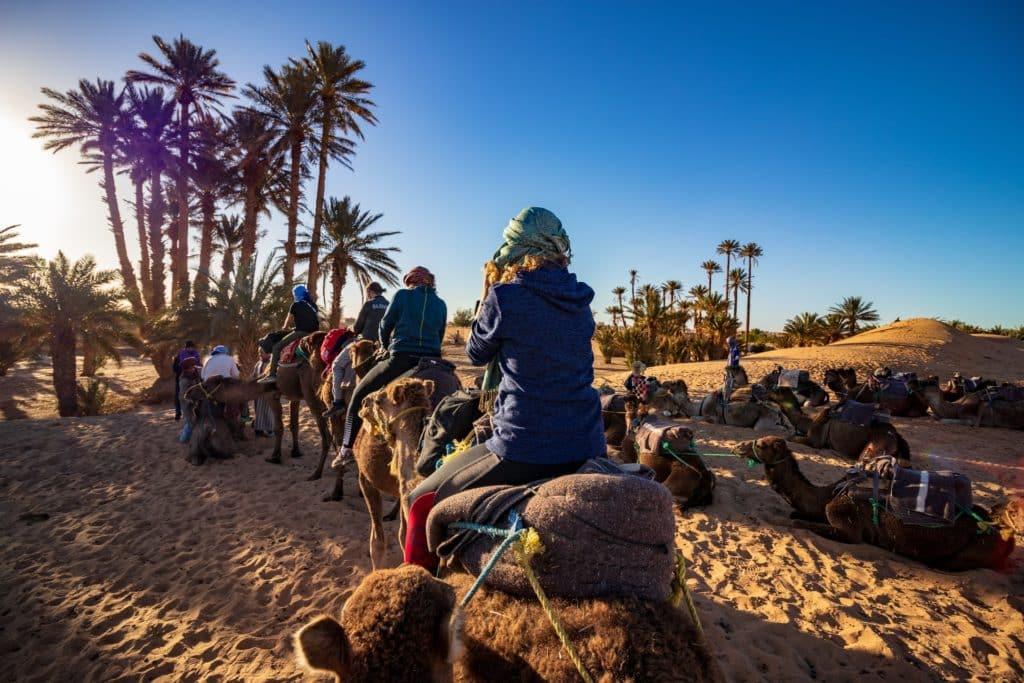 Palmeras en Zagora, desierto de Marruecos, viajar