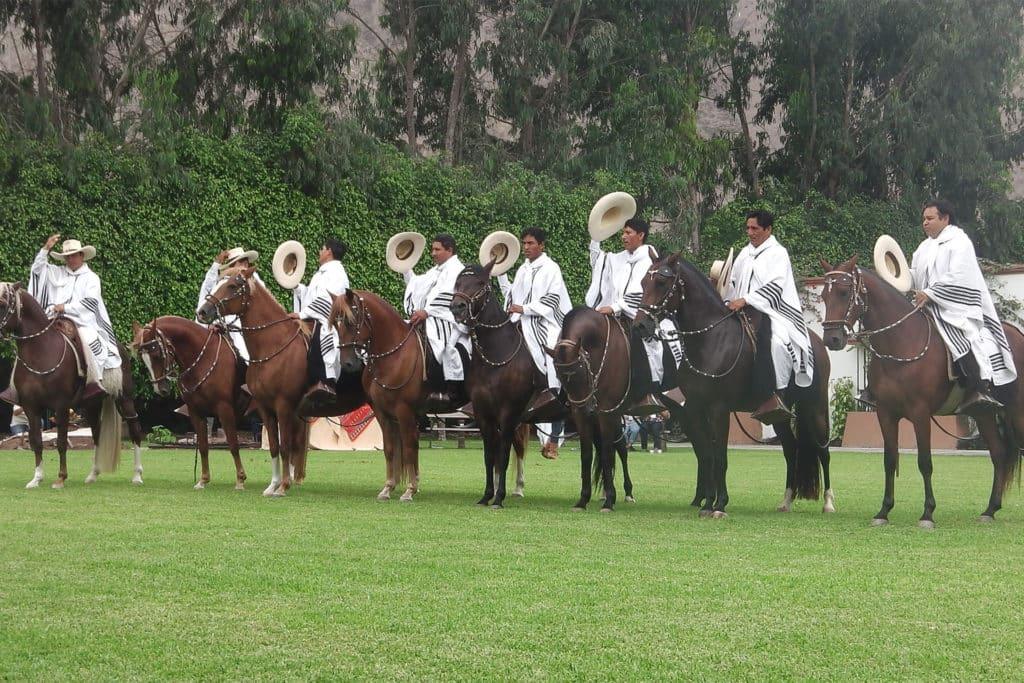 Caballos Peruanos de Paso, qué ver en Perú