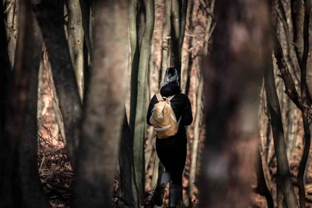 Entdecke die Wälder von Serbien