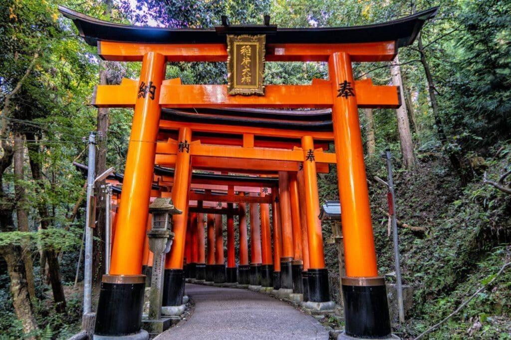Koyot Japan